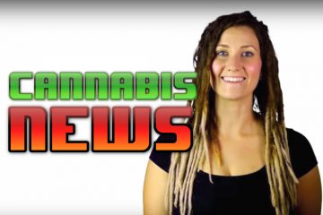 Cannabis News Hollywood